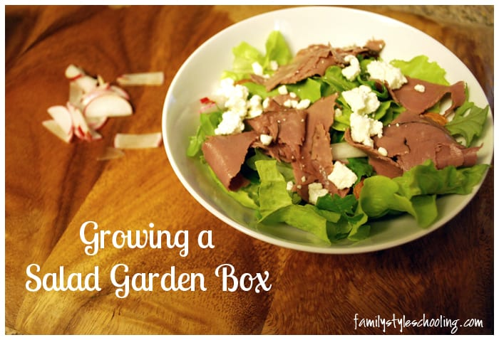 growing a salad garden box