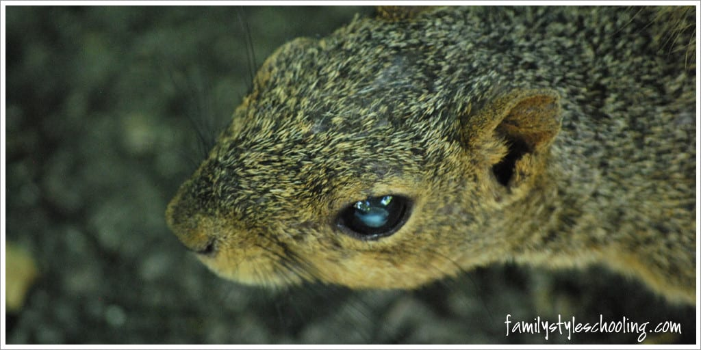 The squirrels were very comfortable with people out there, so she captured a great close up of one!