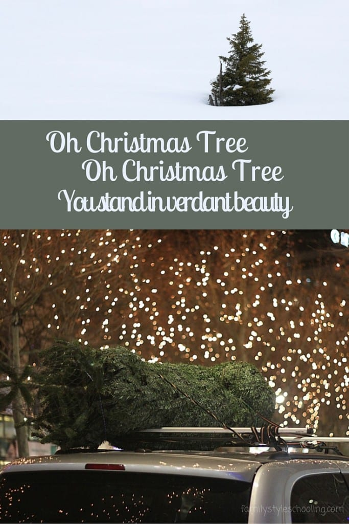 The Verdant Beauty of a Christmas Tree - Family Style Schooling